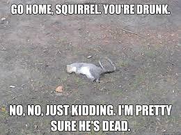 Dead Squirrel Meme - dead squirrel memes quickmeme