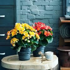 fleurs dans une chambre customiser un pot de fleurs avec une chambre à air
