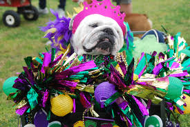 thanksgiving parade in houston it looks like a great weekend for mardi gras parades around