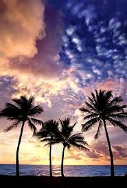 best 25 florida palm trees ideas on best island in