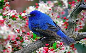 blue bird wallpaper for walls 22 hd wallpaper collections