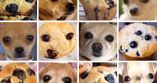 I Like Food Meme - puppies or food 8 pics that will make you question reality