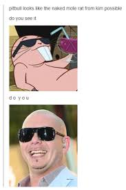 Naked Mole Rat Meme - pitbull looks like the naked mole rat from kim possible kim