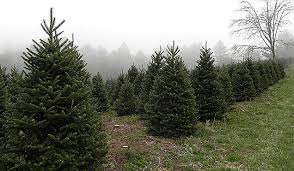 complete list of cut your own christmas tree farms in ct
