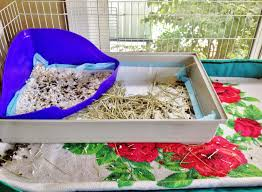 Cages For Guinea Pigs Happily Ever After How To Clean A Midwest Guinea Pig Cage With