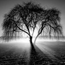 Black And White Photography Best 25 Black And White Landscape Ideas On Fog