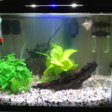 Betta Tank Finally Cycled Opinions Decor