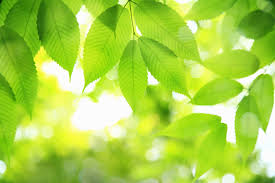 Plants That Don T Need Natural Light by What Is Photosynthesis