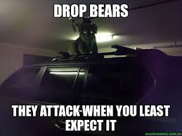 Bears Memes - drop bears they attack when you least expect it creepy koala