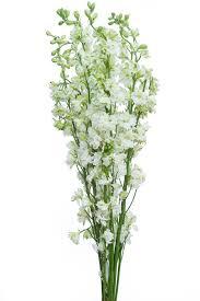 delphinium flowers white delphinium