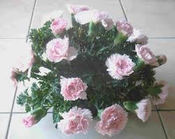 Arrangments by Find Out How To Make A Simple Dome Arrangement With These Easy