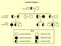 genetics practice problems pedigree tables free printable punnett squares free printable songbook printable