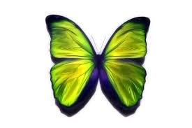 the importance of being a social butterfly startupjobs
