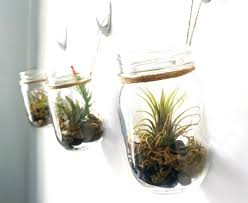 make your own hanging l minimalist air plant terrarium ideas air plant terrarium kit uk