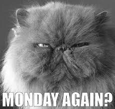 Monday Cat Meme - monday cat i am a official crazy cat lady pinterest monday