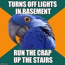 Parrot Meme - paranoid parrot memes imgflip