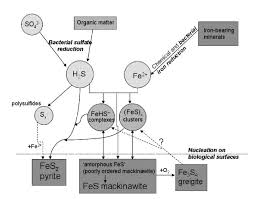 sulfides in biosystems reviews in mineralogy and geochemistry