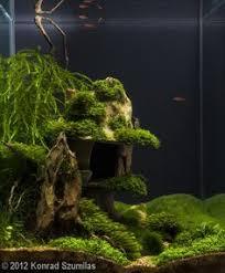 Aquascape Freshwater Aquarium Aquascaping Driftwood Page Fish Tank Pinterest Driftwood