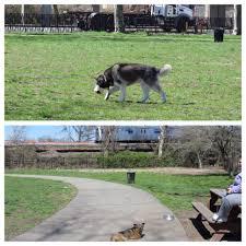 queen s dogs the largest dog park in queens is in rockaway rockawayist