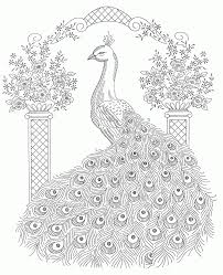 realistic peacock coloring pages free page printable with peacock