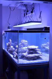 led aquarium lights for reef tanks uk client s reef tank shows amazing development orphek