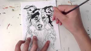australian shepherd illustration time lapse drawing of australian shepard dog by ivanna adames