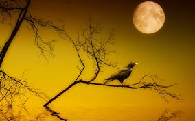 halloween background crow beautiful hqfx wallpaper u0027s collection crow wallpapers 46 of