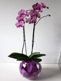 orchid centerpiece best 25 orchid centerpieces ideas on orchid wedding