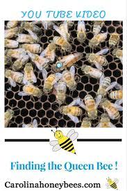 11992 best beekeeping images on pinterest honey bees bee