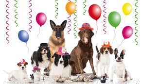 dog birthday party doggie birthday party executive dog lounge