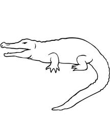 Coloriage  Crocodile  Coloriages à imprimer gratuits
