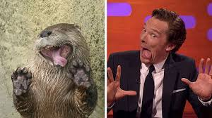 Cumberbatch Otter Meme - rumors confirmed benedict cumberbatch is an otter 10 pics