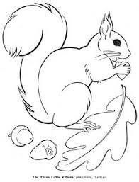 squirrel colouring pages homeschooling sciences