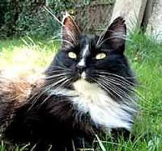 Barn Cat Names Funny Cat Names Award Hubpages