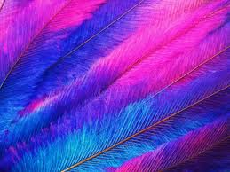 emu feathers tie dye pink purple and blue with link land