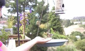june 2012 u2013 notes from a california naturalist