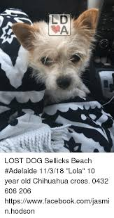 Lost Dog Meme - lost dog sellicks beach adelaide 11318 lola 10 year old chihuahua