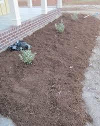 too much mulch u2013 tightening up your garden design u2013 wild roots