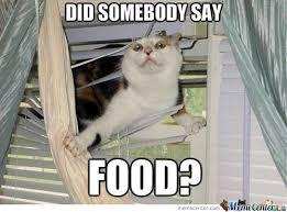 Diet Meme - ariele sieling s blog how i feel about dieting a cat meme story