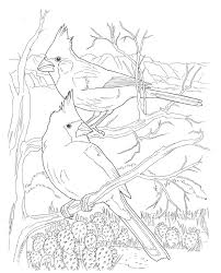 6 images of cardinal coloring pages free printables arizona