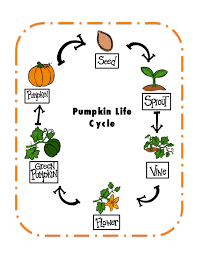 pictures on preschool plant life cycle printables bridal catalog