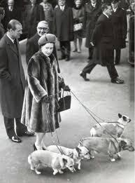 Queen Corgis Queen Elizabeth Ii Birthday Woman And Home