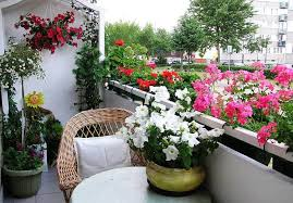 Flower Boxes That Thrive In by Best Flowers For Balcony Garden