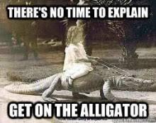 Alligator Memes - raccoon riding an alligator