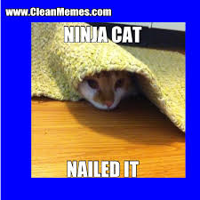 nailed it clean memes