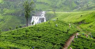 All Island Landscape by All Island Tour Holidays In Sri Lanka Tour Packages