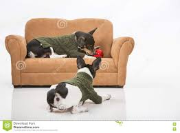 puppies and a christmas ornament stock photo image 81294359