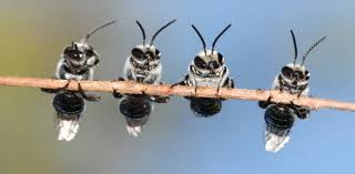 birds bees and bugs your garden is an ecosystem and it needs