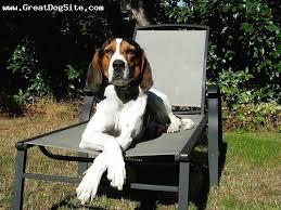 bluetick coonhound nh gc34g94 sd treeing walker coonhound unknown cache in new