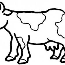 page of a cow